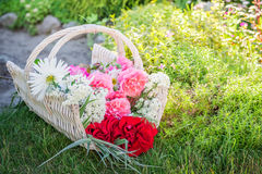 Freshly cut flowers in basket in sunny garden Royalty Free Stock Photography