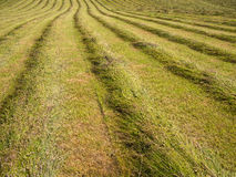 Freshly Cut  Grass in a Field Stock Image