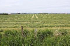 Freshly cut Grassland Royalty Free Stock Image