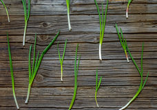 Freshly cut green onion displayed on wood table Royalty Free Stock Photos