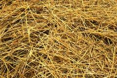 Freshly cut hay Stock Image