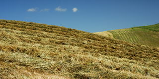 Freshly cut hay. In the fields with blue almost cloudless sky stock image