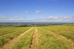 Freshly cut hay field Stock Photo
