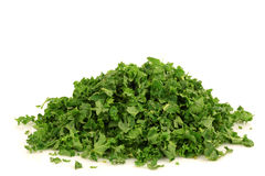 Freshly cut kale cabbage Stock Images