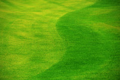 Freshly cut lawn. A fresh-mown lawn with stripes and curves. Focus on center of image, small depth of field Royalty Free Stock Photo