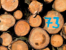 Freshly cut logs Royalty Free Stock Photography