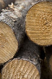 Freshly Cut Logs. Closeup view of a pile of freshly cut pine logs Royalty Free Stock Images