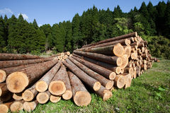 Freshly cut logs piled up Royalty Free Stock Images