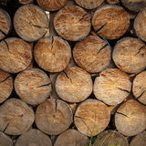 Freshly cut logs in stack Stock Photography