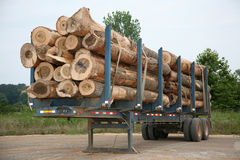 Freshly cut logs on trailer Royalty Free Stock Photo