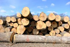 Cut trees for lumber industry Stock Photos