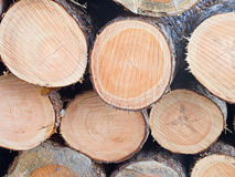 Freshly cut pines Royalty Free Stock Image