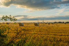 Freshly cut straw bales in a field at sunset Stock Photo