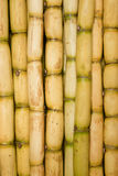 Freshly Cut Sugar Cane Royalty Free Stock Photography