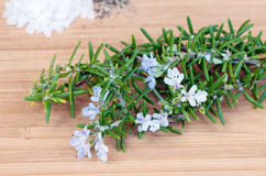 Freshly cut thyme Royalty Free Stock Photography