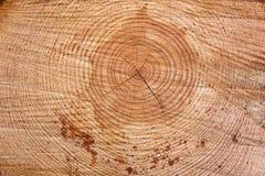 Freshly cut tree log Stock Image