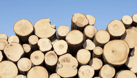 Freshly cut tree logs piled up Stock Image