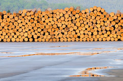 Freshly cut tree logs piled up Royalty Free Stock Images