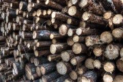 Freshly cut tree logs Royalty Free Stock Photography