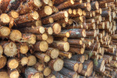 Freshly cut tree logs Royalty Free Stock Image
