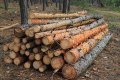 Freshly cut tree logs piled up Stock Photography