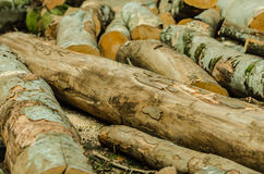 Freshly cut tree logs piled up Royalty Free Stock Photography