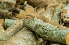 Freshly cut tree logs piled up Stock Images