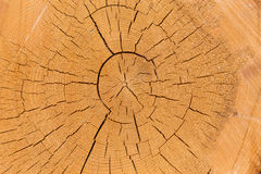 Freshly cut tree logs Stock Images
