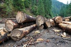 Freshly cut tree trunks near a forest road Stock Photos