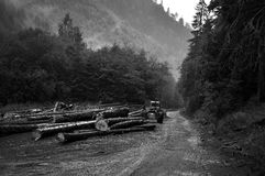 Freshly cut tree trunks near a forest road Stock Photo