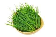 Freshly cut Wheatgrass Royalty Free Stock Photography