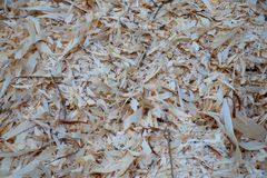 Freshly cut wood chips in European forest stock image