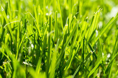 Freshly cuted green grass Stock Photo