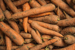 Freshly dug carrots. Freshly carrots for background or texture Royalty Free Stock Photos