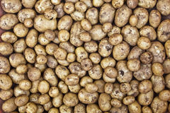 Freshly dug new potatoes Royalty Free Stock Photos