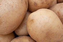 Freshly dug organic potatoes Royalty Free Stock Photos