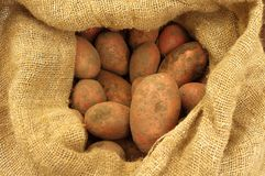 Freshly dug potatoes in a burlap bag Royalty Free Stock Photos