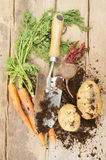 Freshly dug root vegetables Stock Photos