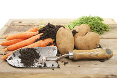 Freshly dug vegetables. With a garden trowel on a rustic bench stock images