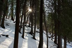 Woodsy scene with inches of fresh snow and sun streaming through copse of trees. Freshly fallen snow blankets the area, with sunshine peeking through copse of stock photography