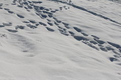 Freshly fallen soft snow with foot prints Stock Photos