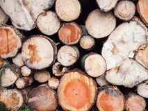 Freshly felled logs Royalty Free Stock Image