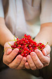 Freshly fruits red currant hands man Royalty Free Stock Photo