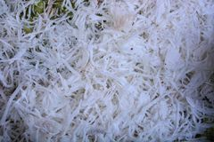 Freshly grated coconut. Note select focus with shallow depth of field Royalty Free Stock Photo