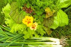 Freshly green-stuff  from the garden Stock Photo