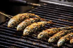 Freshly grilled sardines on the grill Stock Images