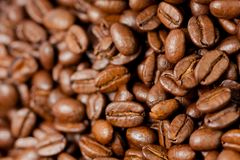 Freshly ground coffee beans roasted with the fruits of the coffee plant, full of grains royalty free stock photos
