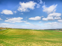 Freshly growing crops Royalty Free Stock Images