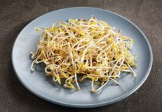 Freshly grown Bean Sprouts on plate Royalty Free Stock Photos
