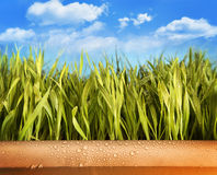 Freshly grown grass in large pot Royalty Free Stock Photography